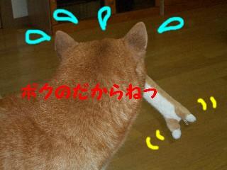 usiroatama
