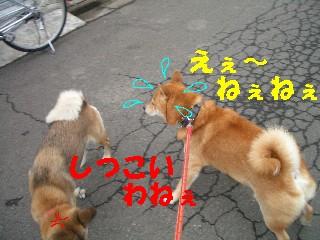 迷い犬10