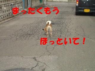 迷い犬11